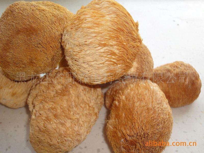 2011年新货 猴头 猴头菇干 保鲜猴头菇 野生猴头菇