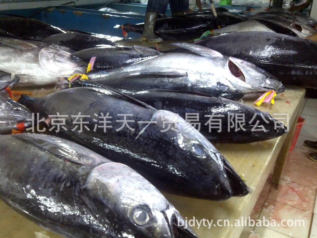 印尼冰鲜金枪鱼空运金枪鱼8小时直达北京100%冰鲜