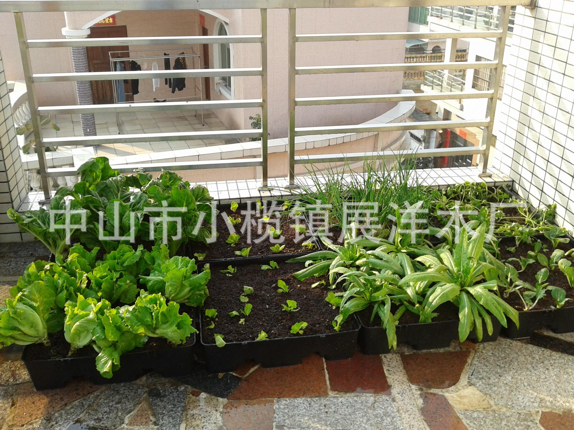阳台种菜种花容器花盆花盘 -花盆 盆景盆 中国黄页
