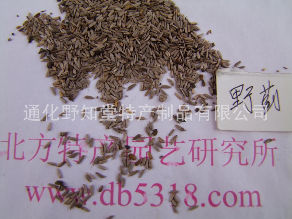 出售野蓟种子 出售长白山野蓟老牛戳种子图片_4