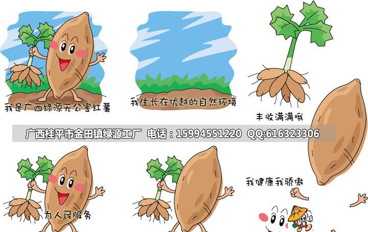 地瓜批发价格【小红薯紫心红薯】紫署 自家基地种植生产 量大从优图片