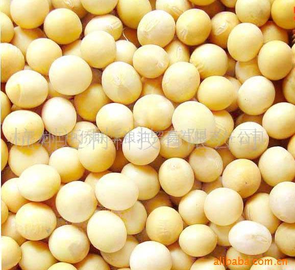黑龙江《金河盛》牌非转基因精选黄豆